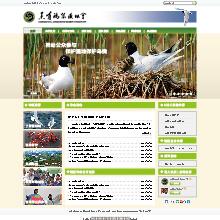 创意共和网站设计案例:黑嘴鸥保护协会官方网站设计